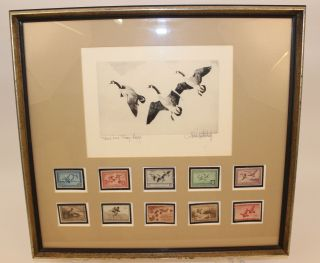 "1936 Richard Bishop Federal Duck Stamp Print "" Canvasbacks Ii "" Framed W/10 Stamps"