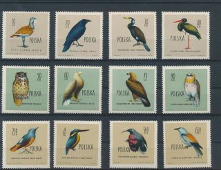 Lk63396 Poland Animals Fauna Flora Birds Fine Lot Mnh