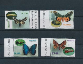 Lk62695 Panama Insects Bugs Flowers Butterflies Edges Mnh