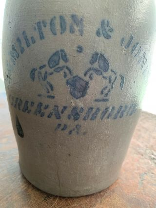 Antique Rare 1g Stenciled Horses Hamilton & Jones Greensboro Pa Whisky Jug
